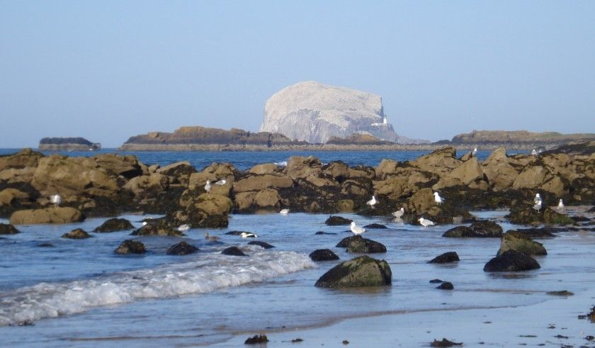 'Bass Rock' -    Margaret Cameron |  Seen from North Berwick