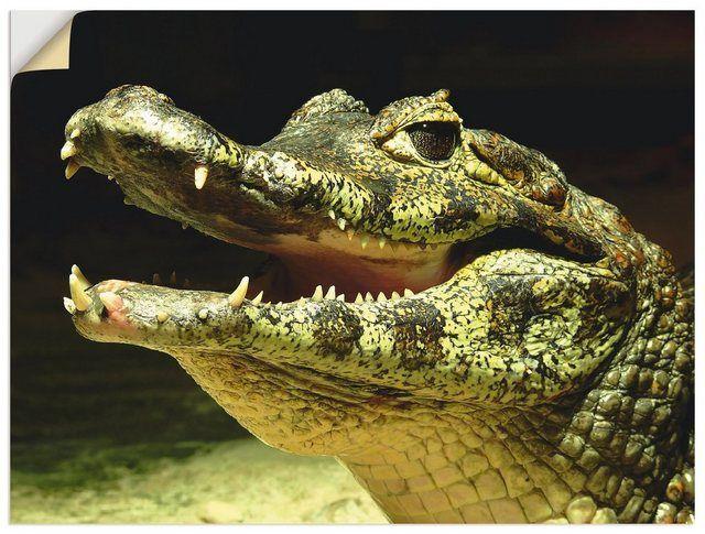 Photo of Premium Wandfolie, Wandfolie »Rico Ködder: Ein lächelndes Krokodil«