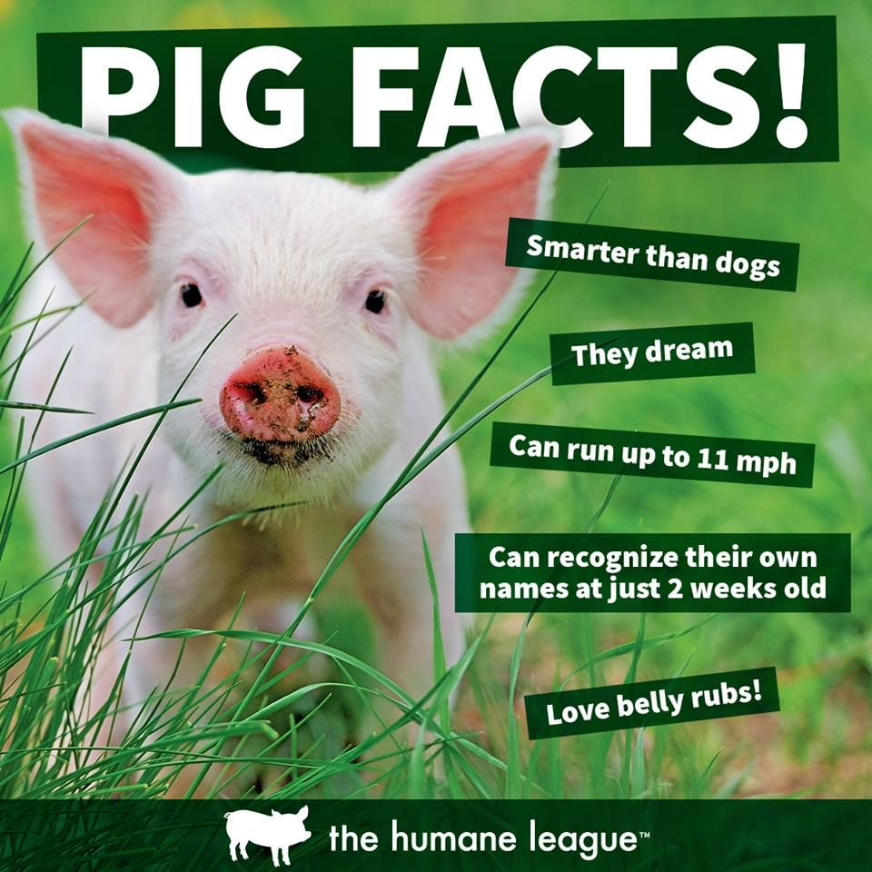 Image of: Infographic Animals Are Intelligent And Affectionate Creatures Pinterest Animals Are Intelligent And Affectionate Creatures Vegan