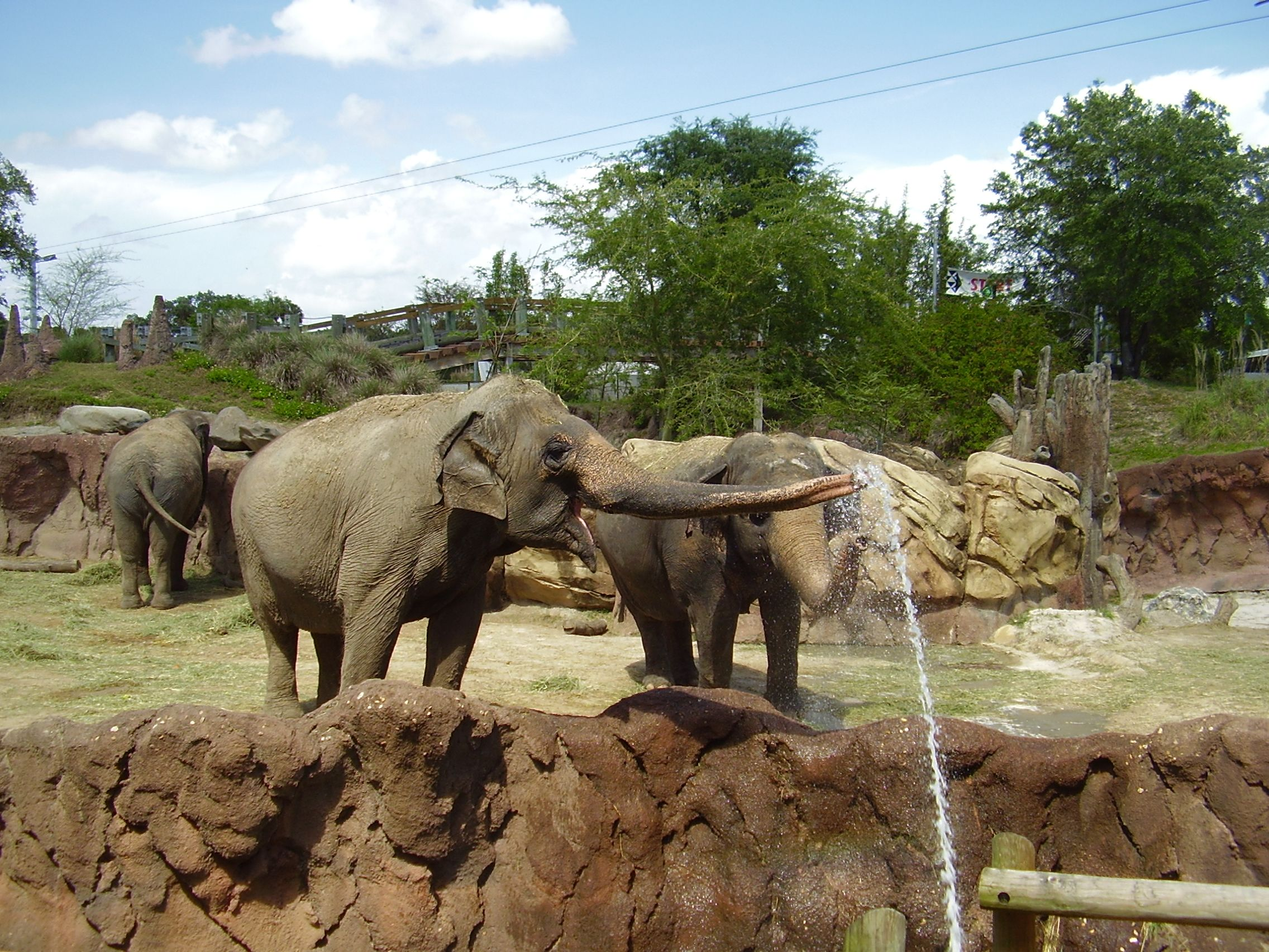 Elephant Washing at Busch Gardens Tampa bay