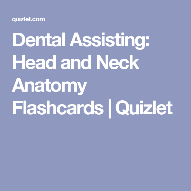 Dental Assisting Head And Neck Anatomy Flashcards Quizlet Teeth