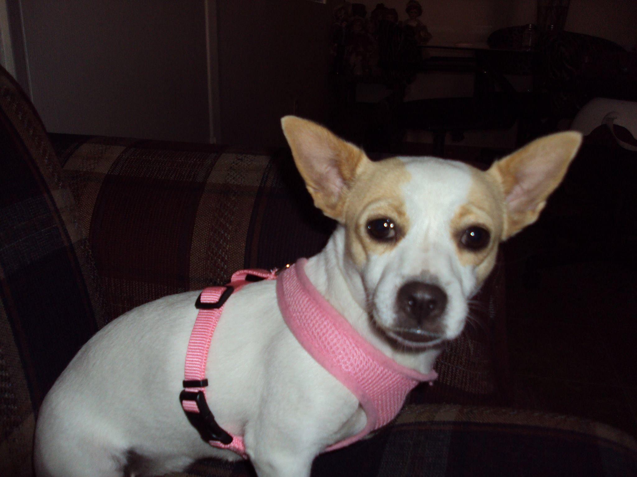 Brandy SchefflerArizona Animal Rescue Alliance 2 stray