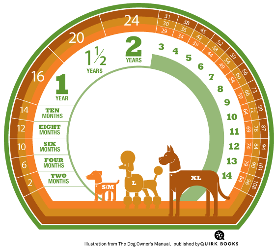 Calculate Your Dogs Age In Human Years