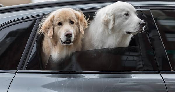 To The Nearest Pet Store Please Http Ift Tt 2ec0fxg With Images Pet Store Pets Golden Retriever
