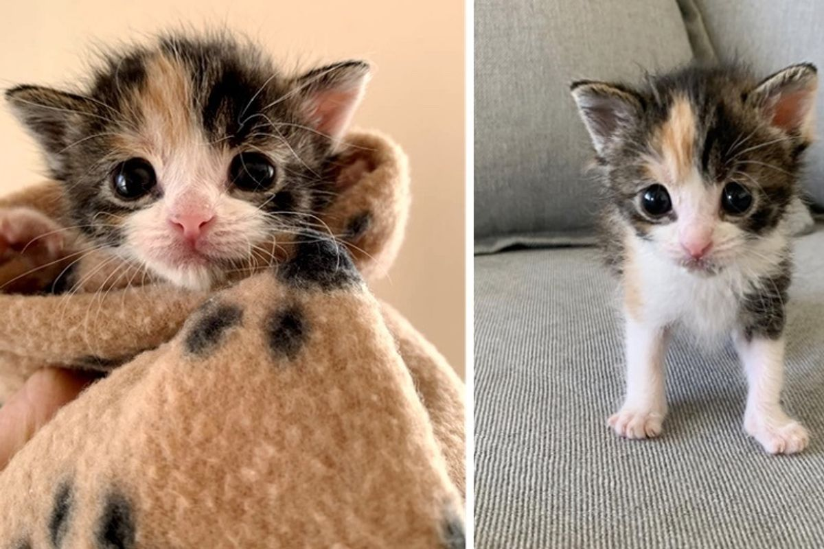 Homeowner Discovers Orphaned Kitten Under Their House After Seeing Stray Cats In Neighborhood Love Meow Stray Cat Cat Mom Kitten