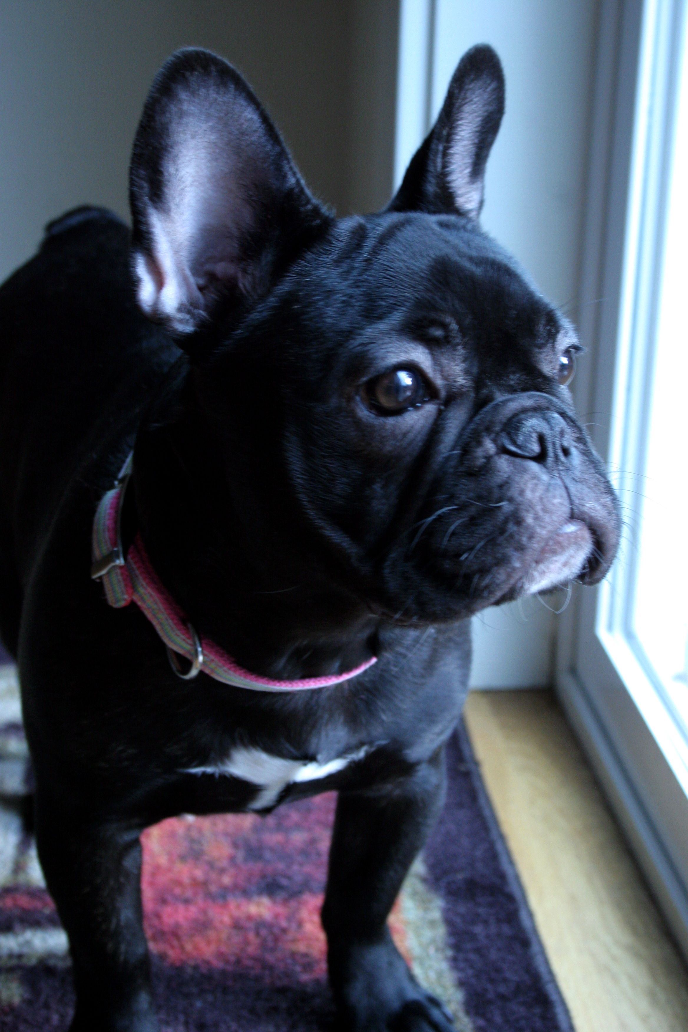 French BullDog Jewelry for Dog Lovers