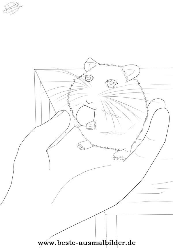 Ausmalbild Hamster | Kiga Ausmalbilder | Pinterest | Ausmalbilder