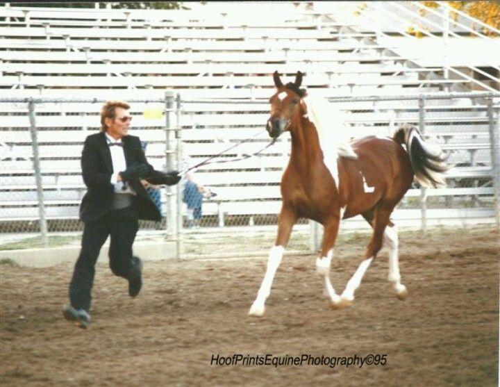 RAR Sweet Heart. 1/2 Arabian ©1998.  All six feet off the ground, Sweet hearts back foot toe touching the ground.