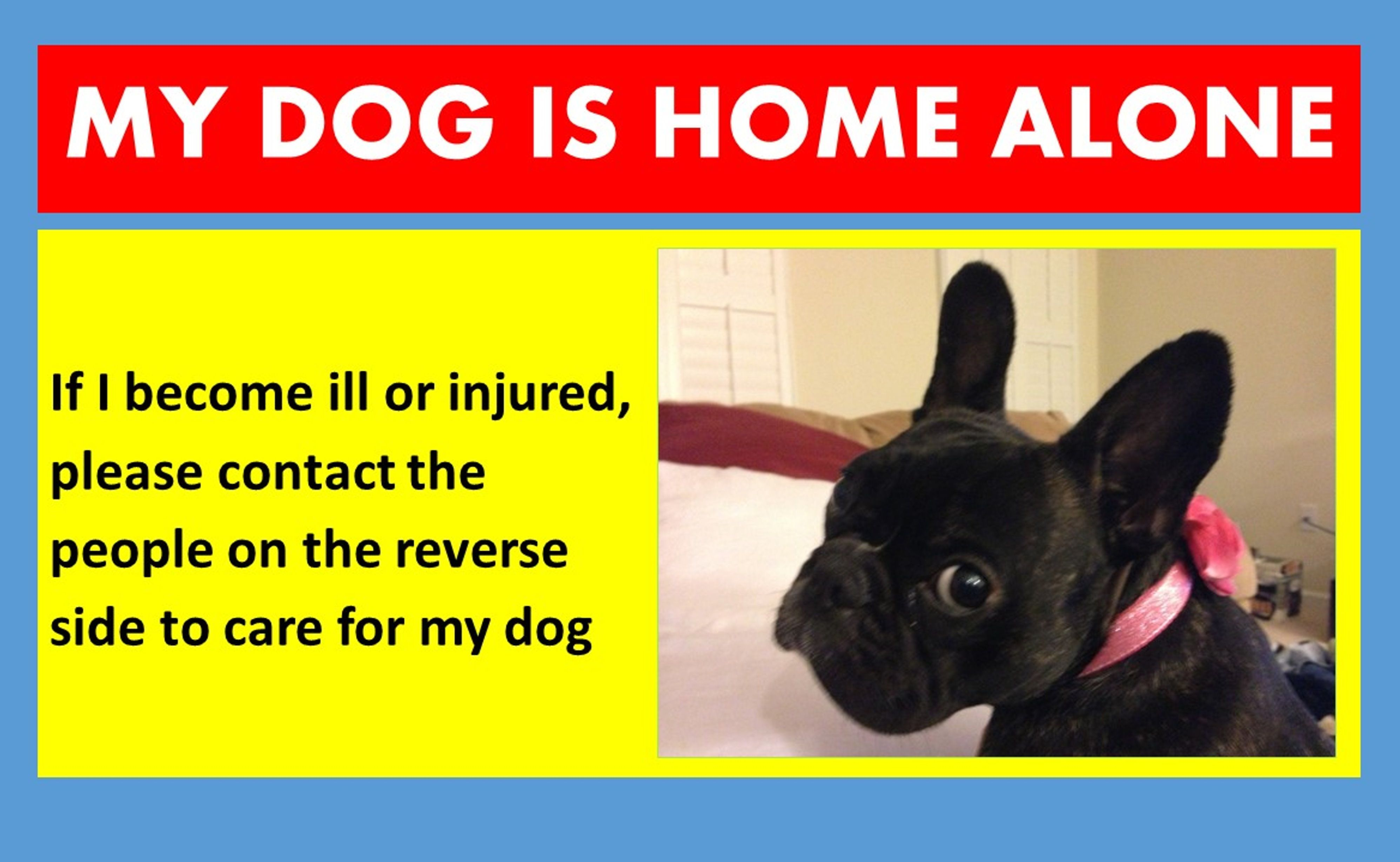 I Made My Own Dog Emergency Wallet Card But You Can Buy One By Following The Link Ernie Dog Emergency Kids Health Card Wallet