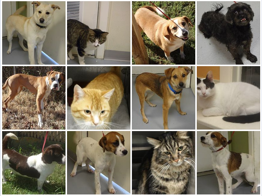 Such Cute Dogs And Cats Need Homes Please Share To Help Them Have A Chance At Adoption More Info Here Http Pawsitivelyte Dogs For Sale Purebred Dogs Dogs