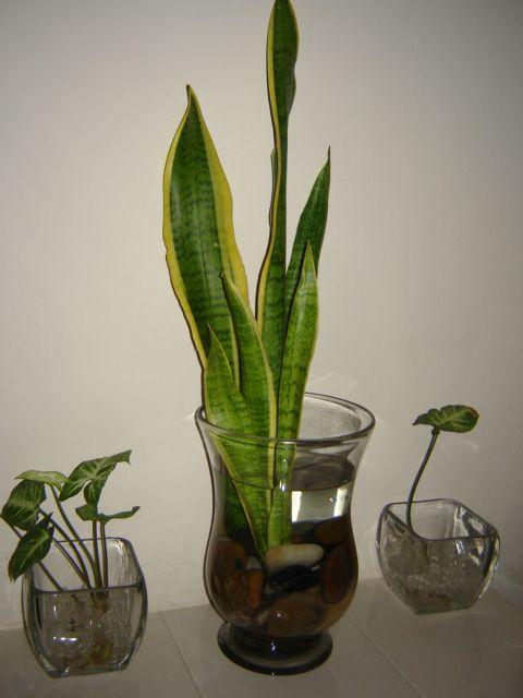 plantas que se puedan sembrar en un jarrn de cristal foro de infojardn