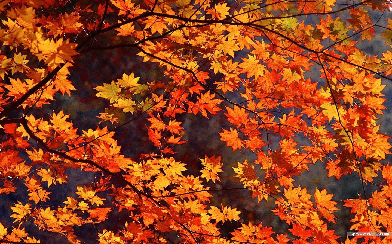 Autumn Wallpapers High Definition Autumn Leaves Wallpaper Fall Wallpaper Desktop Wallpaper Fall