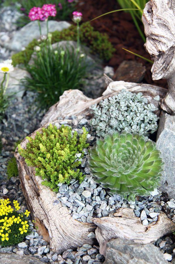Modele De Rocaille De Jardin. Perfect Rocaille Jardin ... | Cactus y ...