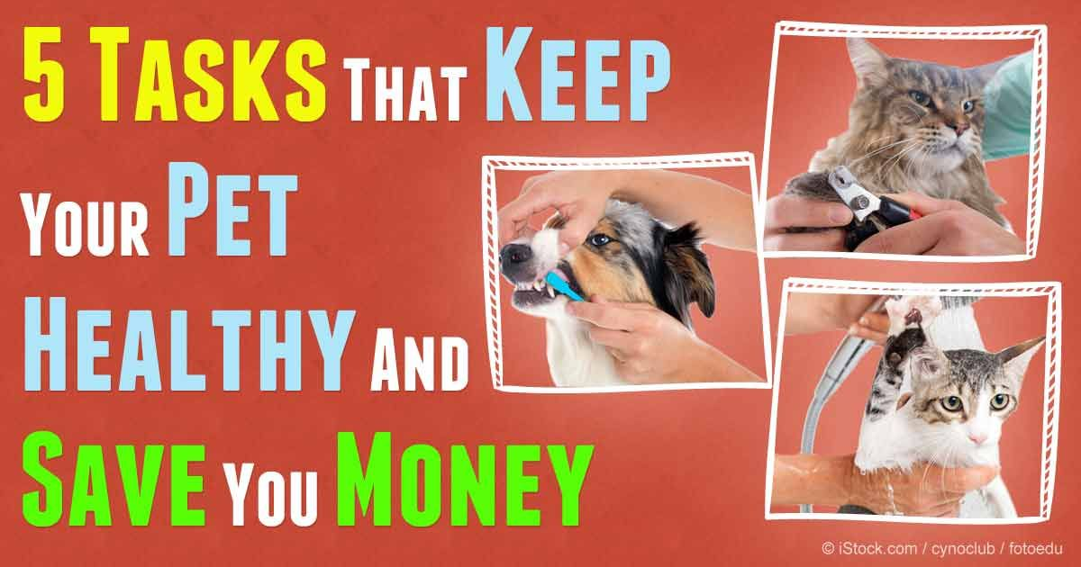 Five At Home Do It Yourself Pet Care Tips Pet Care Tips Pet Care Pet Insurance Reviews