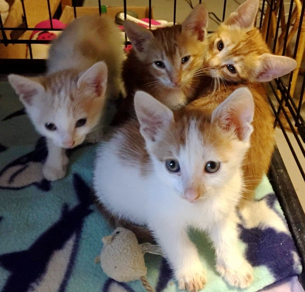 Rescuers Found Kittens In Garbage Bag And Went Back For Their Cat Mom Cat Mom Kitten Season Kittens