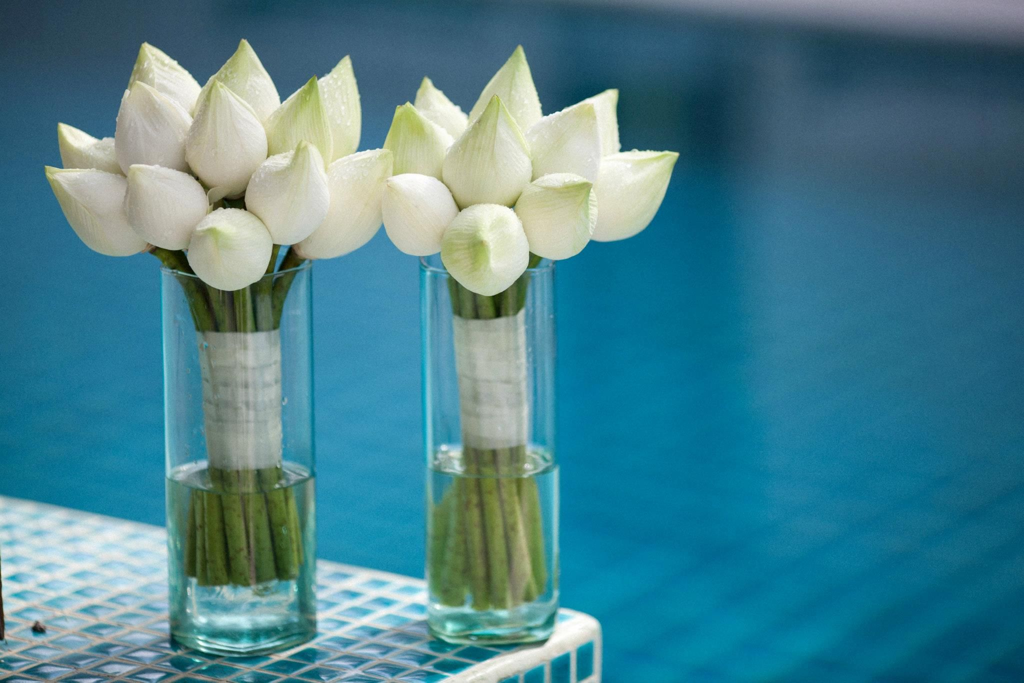 White lotus buds bouquetsr bridesmaids but i want single stem white lotus buds bouquetsr bridesmaids but i want single stem bouquets and dhlflorist Images