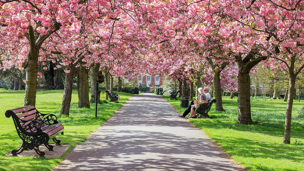 London S Best And Most Famous Parks Greenwich Park London Park Cherry Blossom