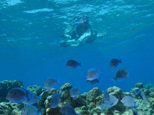 Barrier Reef Snorkel at the Grand Caymans!   Grand cayman ...