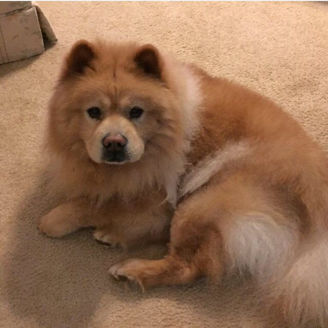 Sweet Biscuit Is For Adoption Or Foster He Is 7 Years Old And