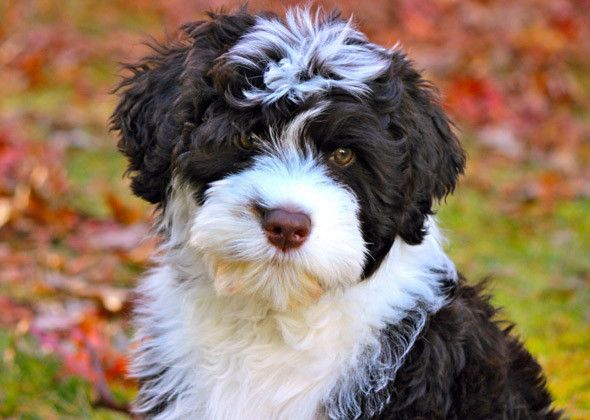 Trendy Dog Names Portie Puppy | Woman's Best Friend | Girl dog names