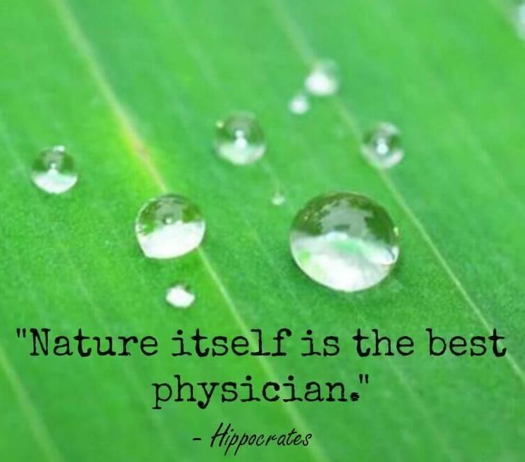 Nature Itself Is The Best Physician Hippocrates Quotesporn