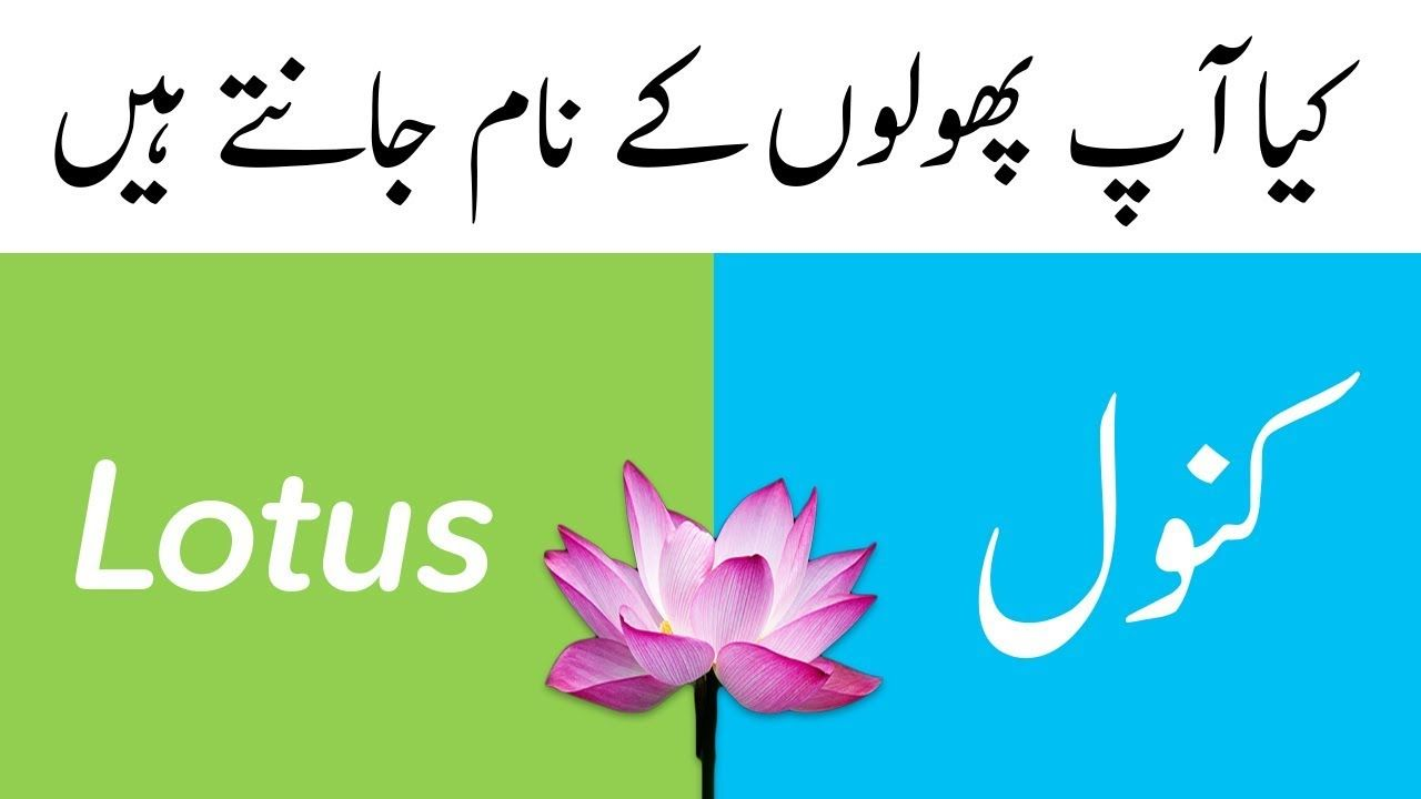 Flower Names In English And Urdu With Pictures Learn English Vocabulary In 2020 Flower Names Learn English Vocabulary Beautiful Flower Names