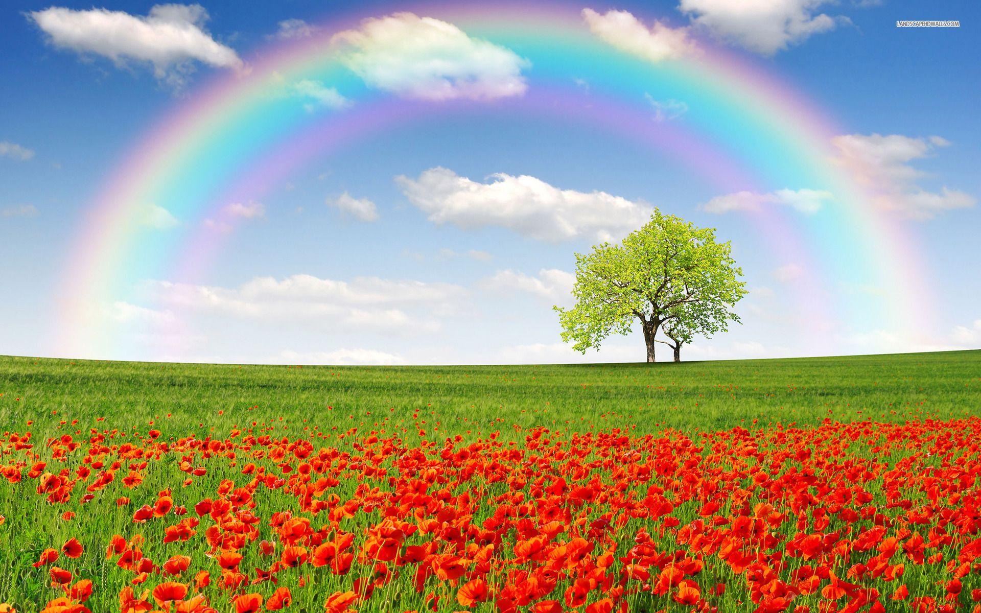 f29279d239503 Poppy Field Trees Rainbow Sky desktop PC and Mac wallpaper ...
