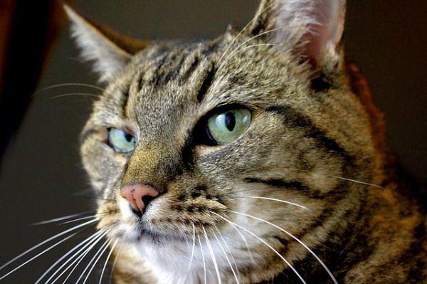 punishcat6 Cats, Tabby cat, Tabby