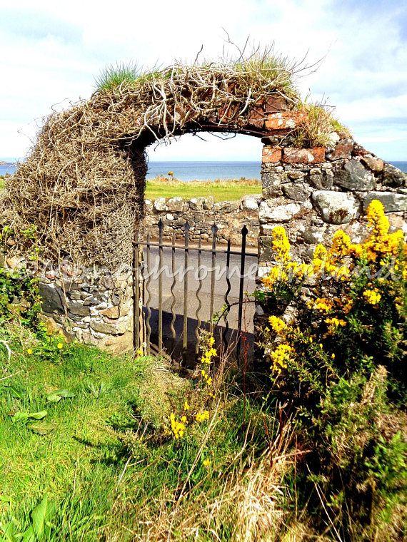 Irish gate yellow flowers from ireland instant download ireland in irish gate yellow flowers from ireland instant download mightylinksfo