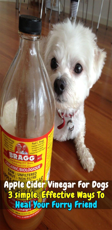 Apple Cider Vinegar For Dogs 3 Effective Ways To Heal