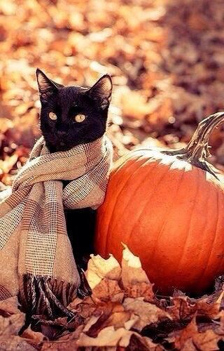 Black Cat Wearing A Scarf Sitting By A Pumpkin in the Autumn Leaves #autumnwallpaper