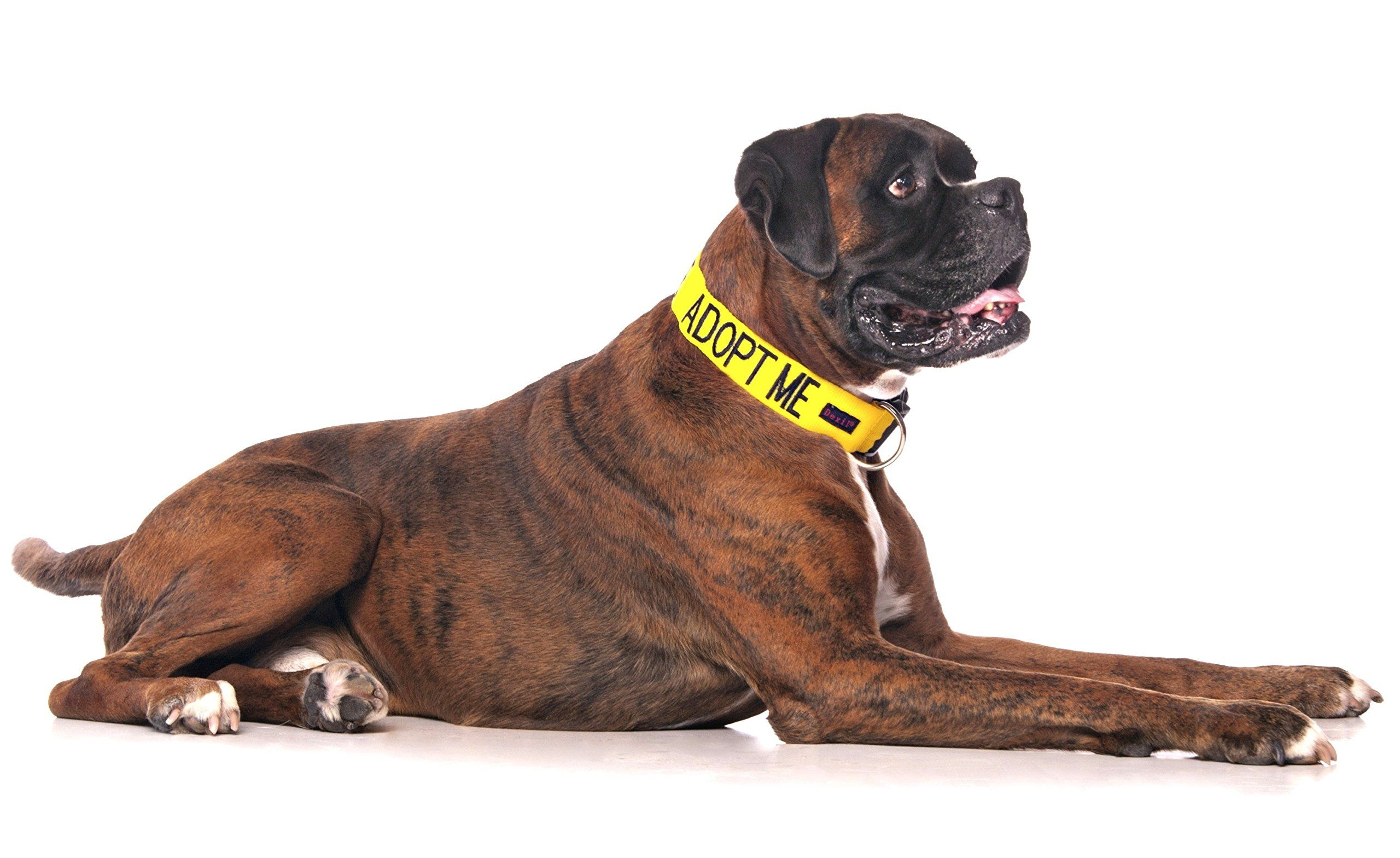 Adopt Me Yellow Color Coded Lxxl Semichoke Dog Collar Needs A Home Donate To Your Local Charity Check Out The Image By Visitin Dogs Local Charity Dog Collar