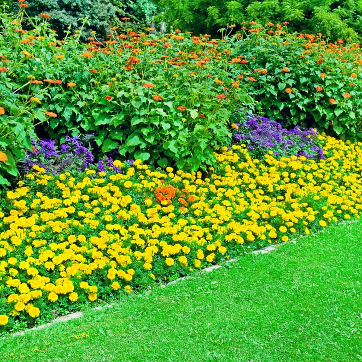 7 Affordable Landscaping Ideas For Under 1 000: 20 Cheap Landscaping Fixes That Look Expensive