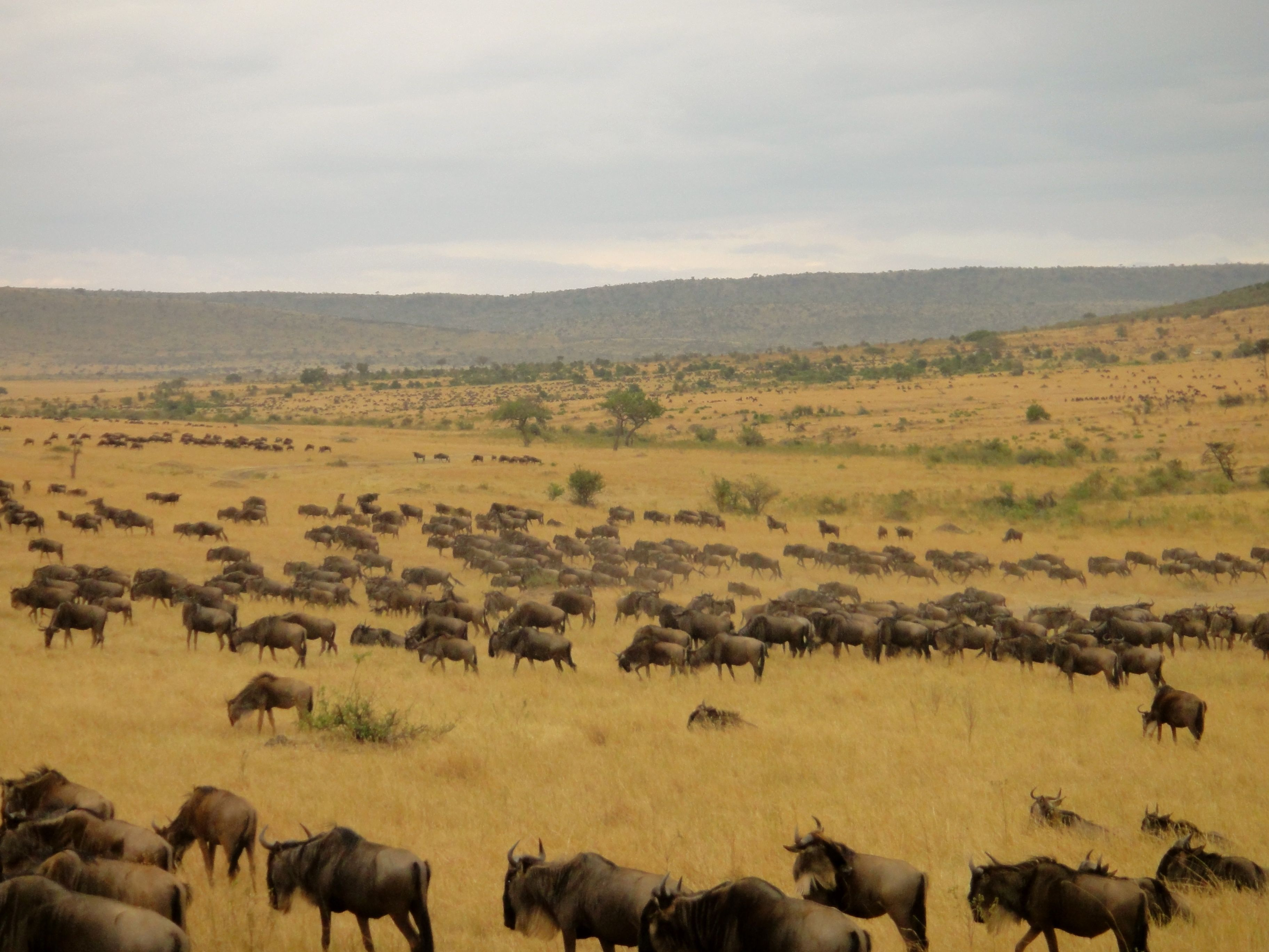 How Much Does a Safari in Africa Cost (With images ...