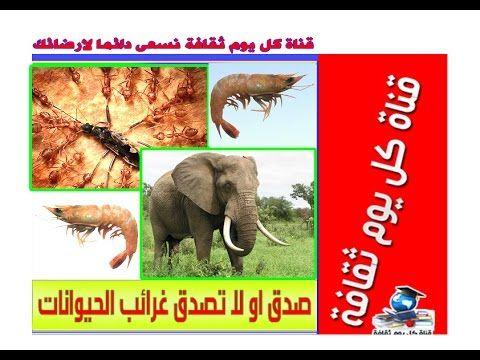 صدق او لا تصدق غرائب الحيوانات معلومات عن الحيوانات عجائب الدنيا Animals Elephant