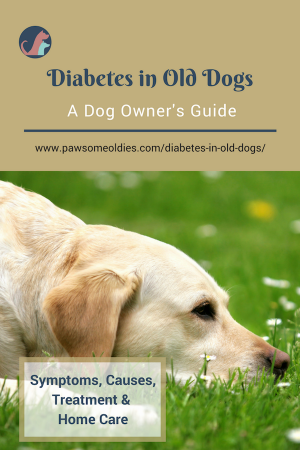 Pin By Melissa Robertus On Dogs In 2020 Diabetic Dog Dog Health Old Dogs