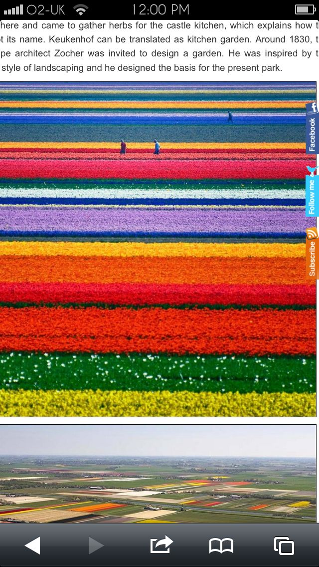 Field of tulips Holland