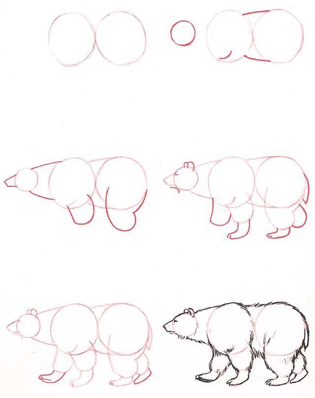 L Ours De Profil Aprender A Dibujar Animales Dibujos Tutorial
