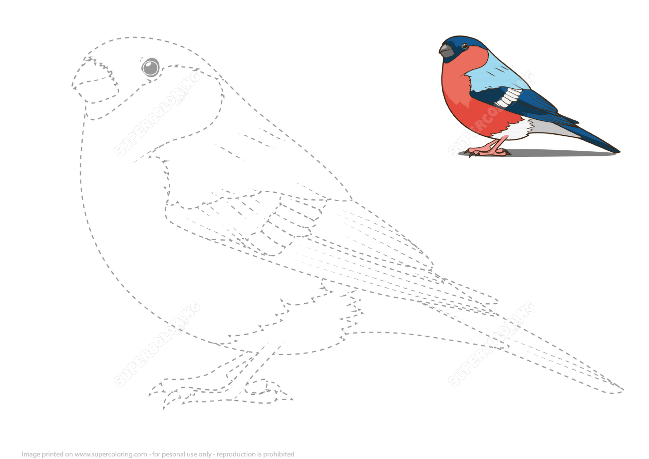 Draw A Bullfinch By Tracing Dashed Lines And Color