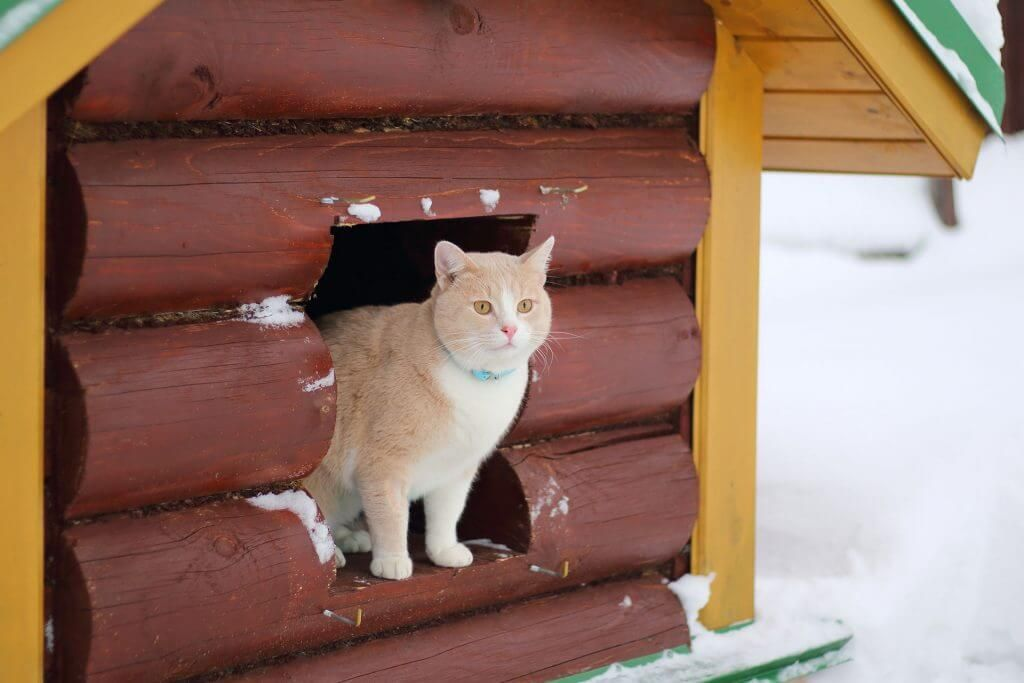 Heated cat house why it's necessary & how to build your
