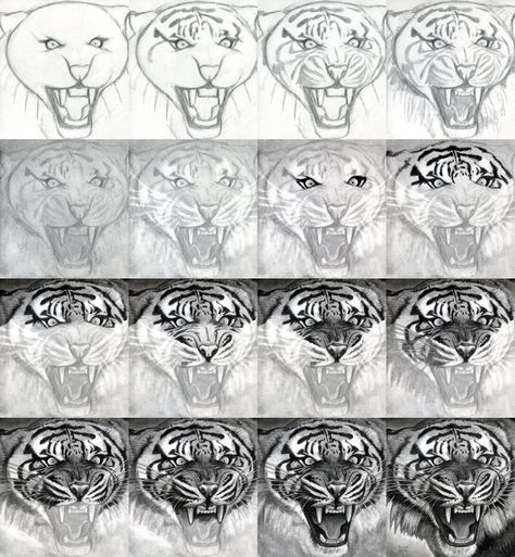 Explore tiger drawing tutorial and more how to draw a realistic tiger honestly i could only do the first row