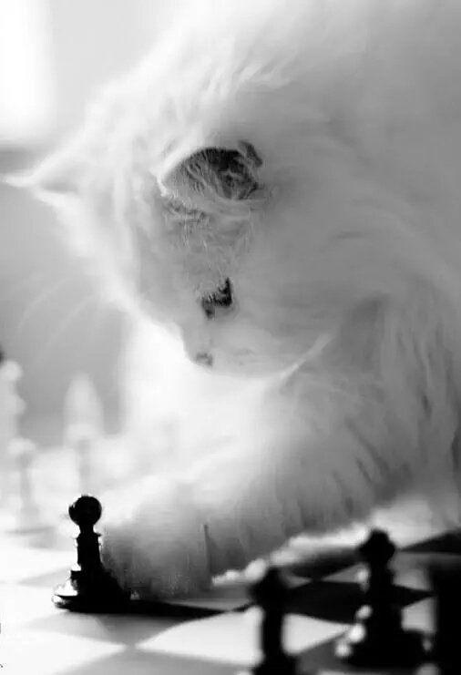 猫ネコ (アイコン変えました) on Katzen, Ausgestopftes tier, Hübsche