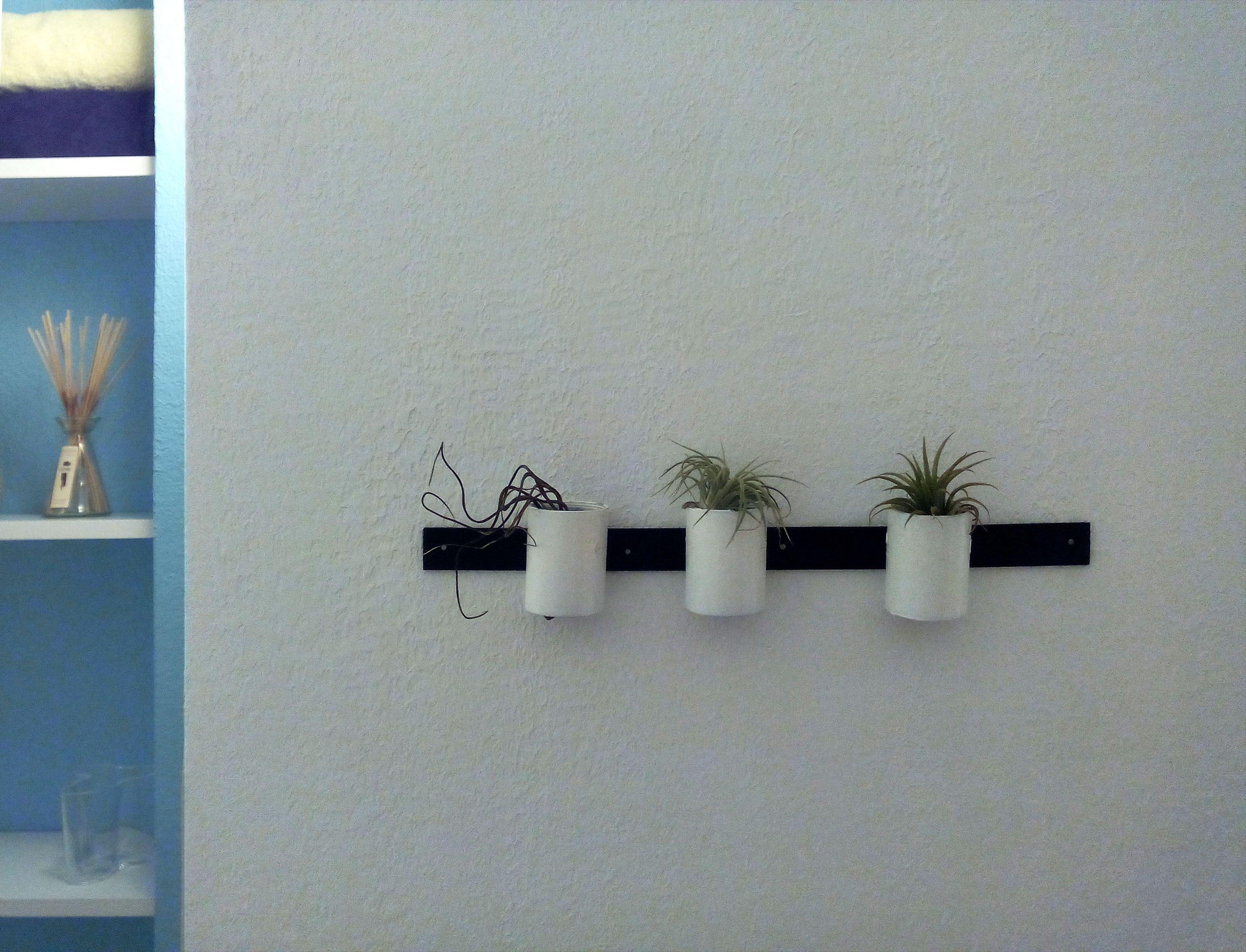 tillandsia piante aeree vasi decorazione bagno dcoration salle de bains bleu