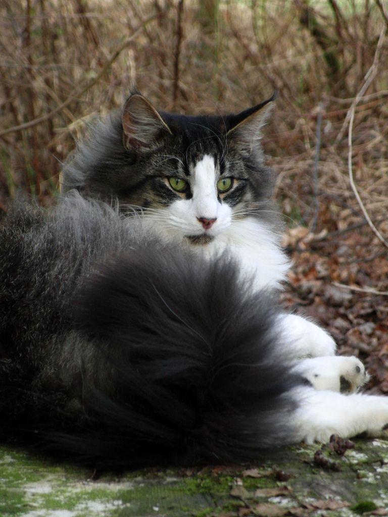 Cat Fact Cats Protection, the UK's leading cat welfare