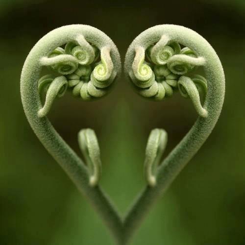 Fiddlehead fern! Love!