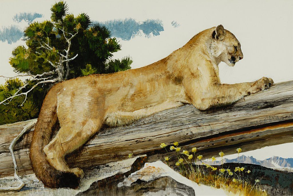 Bob Kuhn - The Cougar 17 x 25.5 mixed media on paper board (1977)