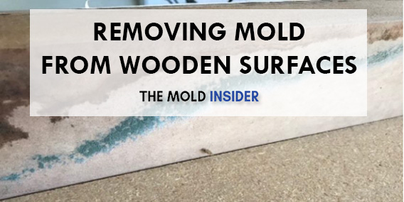 Mold Is Very Versatile Give It The Right Conditions And Watch It Flourish Like A Well Watered And Fertilized Garden Get Rid Of Mold Mold Remover Cleaning Mold