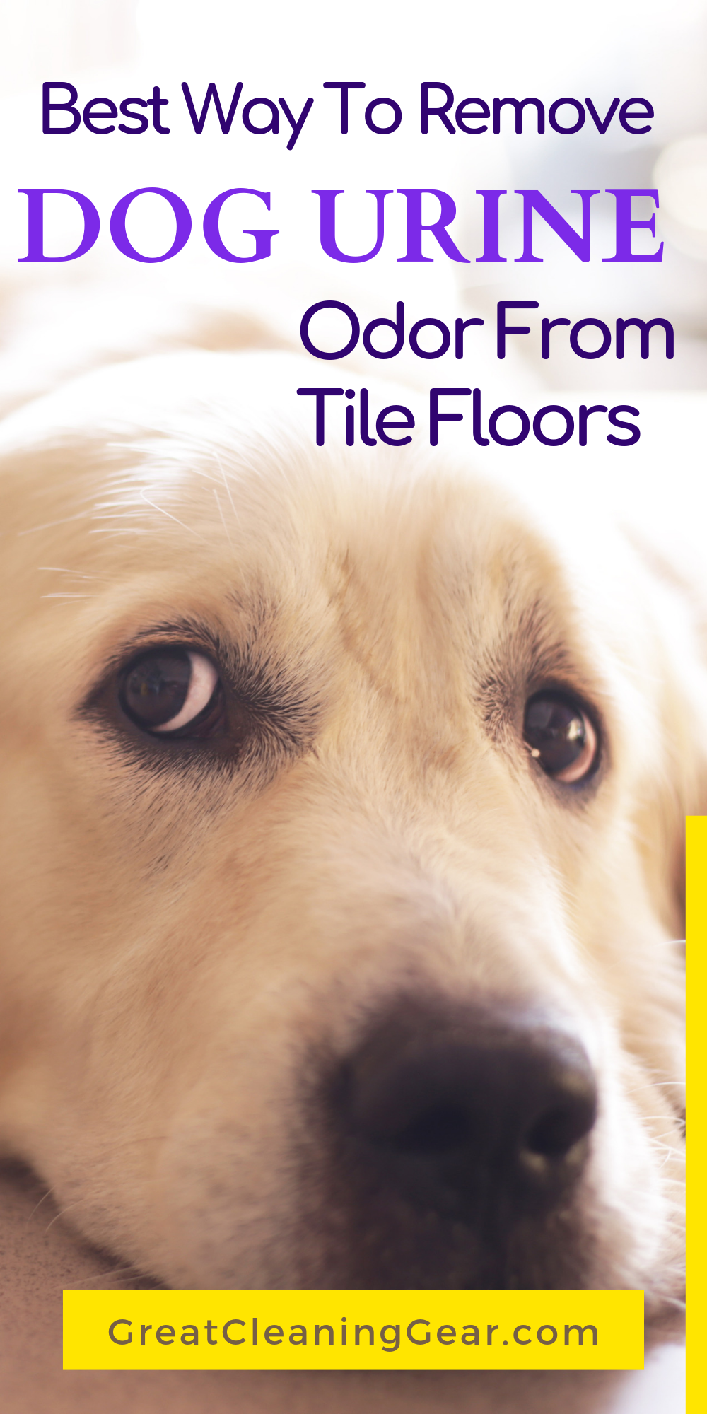 How to Remove Dog Urine Odor from Tile Floors - Great Cleaning Gear