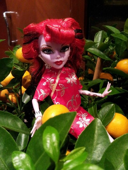 Loving mandarin oranges