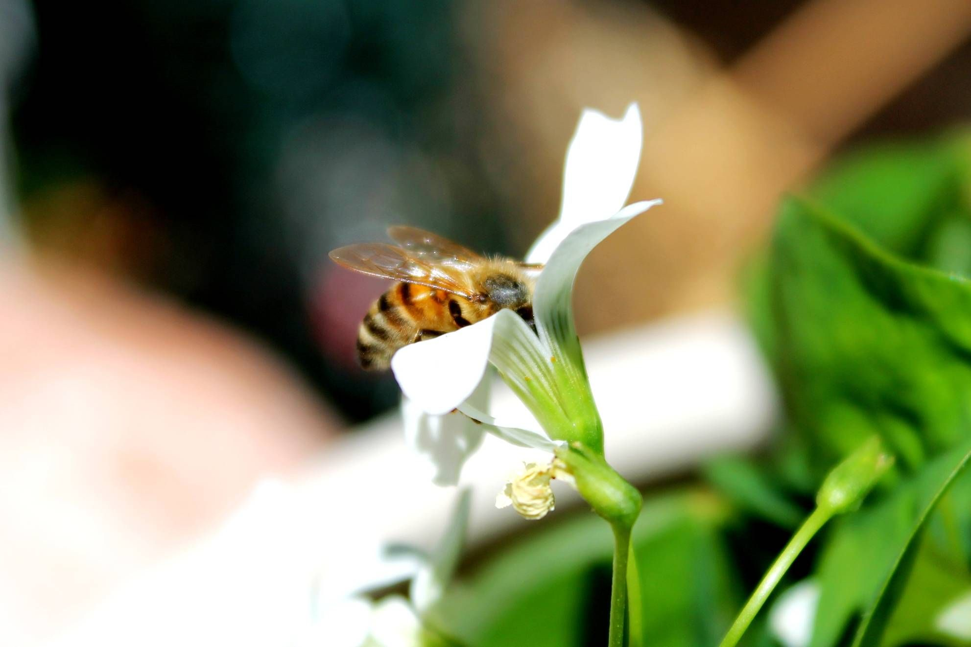 Bee landing by Jason Megraw